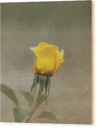 Yellow Rose Wood Print by Kim Hojnacki