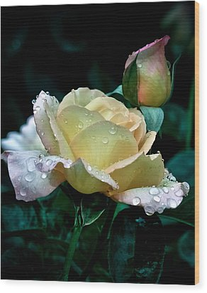 Yellow Rose Morning Dew Wood Print by Julie Palencia