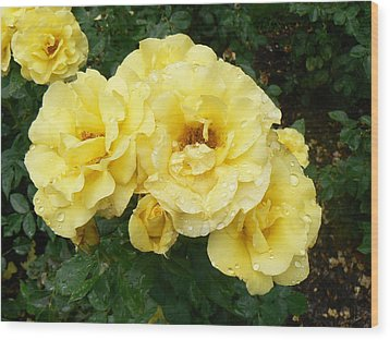 Yellow Rose Of Pa Wood Print by Michael Porchik