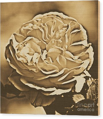 Yellow Rose Of Texas Floral Decor Square Format Rustic Digital Art Wood Print by Shawn O'Brien