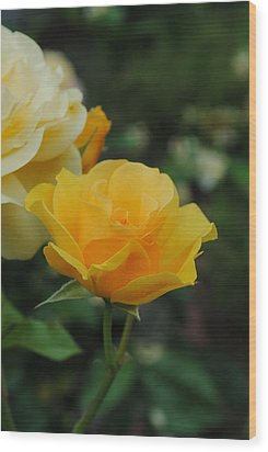 Yellow Rose Portland Wood Print