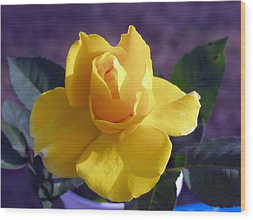 Yellow Rose Wood Print by Ronald Olivier
