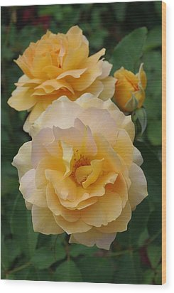 Wood Print featuring the photograph Yellow Roses by Marilyn Wilson