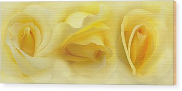 Yellow Roses Triptych Panel Wood Print by Jennie Marie Schell