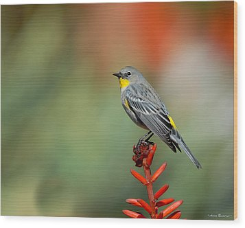 Wood Print featuring the photograph Yellow-rumped Warbler by Avian Resources