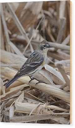 Wood Print featuring the photograph Yellow-rumped Warbler by Debra Martz