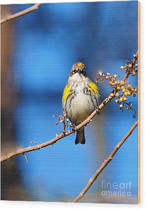 Yellow-rumped Warbler Wood Print by Olivia Hardwicke