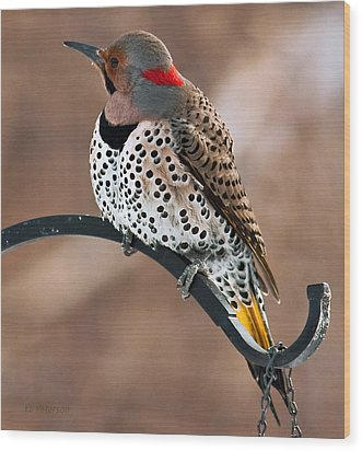 Yellow-shafted Northern Flicker Wood Print by Edward Peterson