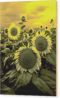 Yellow Sky Yellow Flowers. Wood Print by James Steele