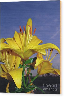 Yellow Spring  Wood Print