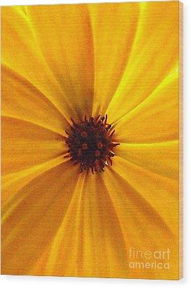 Yellow Splendour Wood Print