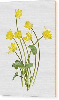 Yellow Spring Wild Flowers Marsh Marigolds Wood Print by Elena Elisseeva