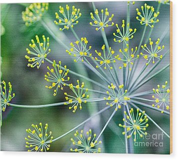Wood Print featuring the photograph Yellow Stars by JRP Photography