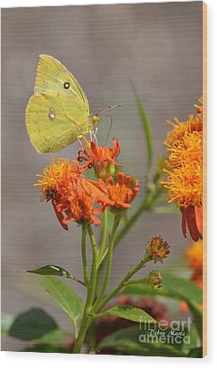 Wood Print featuring the photograph Yellow Sulphur Butterfly by Debra Martz