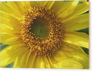 Yellow Sunshine Wood Print by Neal Eslinger