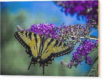 Wood Print featuring the photograph Yellow Swallowtail by Phil Abrams