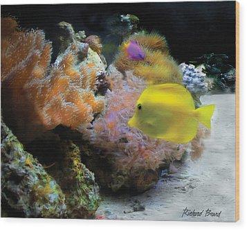 Yellow Tang Wood Print