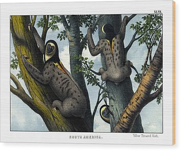 Yellow Throated Sloth Wood Print by Splendid Art Prints