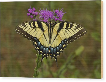Yellow Tiger Swallowtail Butterfly. Wood Print