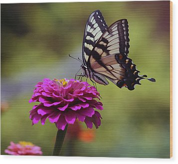 Wood Print featuring the photograph Yellow Tiger Swallowtail Butterfly by Kay Novy