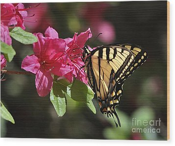 Wood Print featuring the photograph Yellow Tiger Swallowtail Butterfly by Nava Thompson