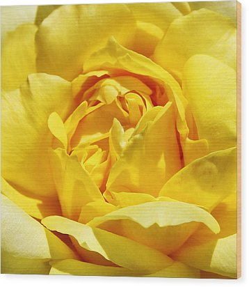 Yellow Tourmaline Rose Palm Springs Wood Print by William Dey