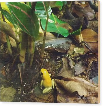 Yellow Tree Frog Wood Print by Brigitte Emme