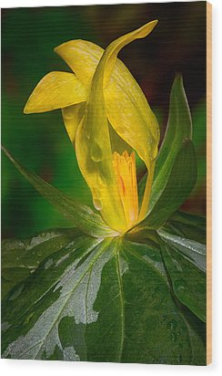 Wood Print featuring the photograph Yellow Trillium by Tyson and Kathy Smith