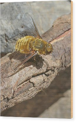 Wood Print featuring the photograph Yellow True Bee Fly - Bombiliinae by Jivko Nakev