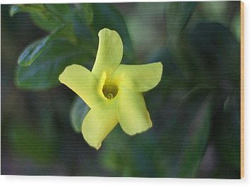 Wood Print featuring the photograph Yellow Trumpet Flower by Ramabhadran Thirupattur