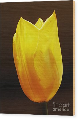 Yellow Tulip 3 Wood Print by Sarah Loft