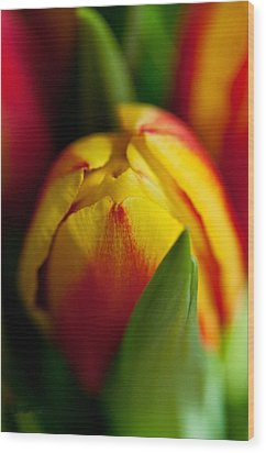 Wood Print featuring the photograph Yellow Tulip by Sabine Edrissi