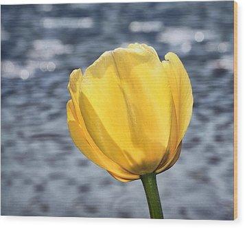 Wood Print featuring the photograph Yellow Tulip Shimmering Water by Tracie Kaska
