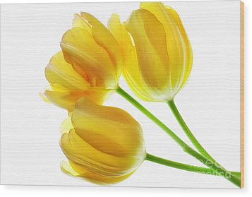 Yellow Tulips Wood Print by Charline Xia