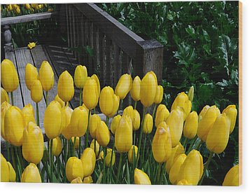 Wood Print featuring the photograph Yellow Tulips by Haleh Mahbod