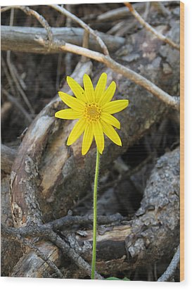 Wood Print featuring the photograph Yellow Wildflower by Laurel Powell