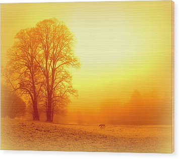 Yellow Winter Sunrise Wood Print by The Creative Minds Art and Photography
