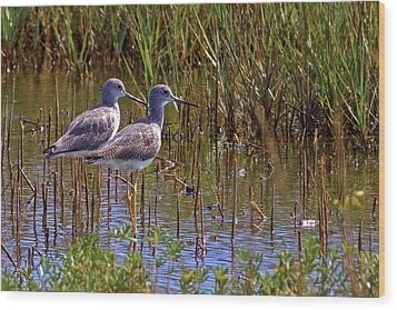 Wood Print featuring the photograph Yellowlegs Of Texas by Gary Holmes