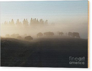 Yellowstone Bison In Early Morning Fog Wood Print by Bob and Nancy Kendrick