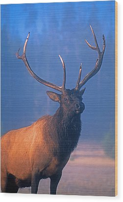 Wood Print featuring the photograph Yellowstone Bull Elk by Dennis Cox WorldViews