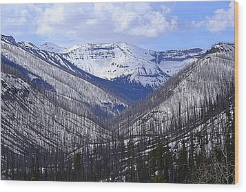 Wood Print featuring the photograph Yellowstone East Entrance Spring by Nadalyn Larsen