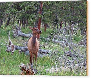 Yellowstone Moments. Doe Wood Print by Ausra Huntington nee Paulauskaite