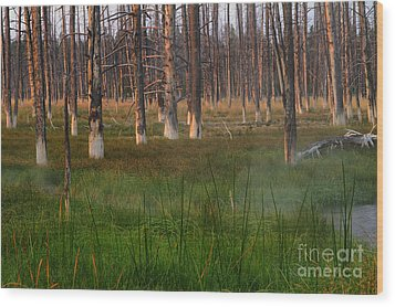 Wood Print featuring the photograph Yellowstone Mysterious Morning by Teresa Zieba