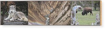 Yellowstone National Park Montana  3 Panel Composite Wood Print by Thomas Woolworth