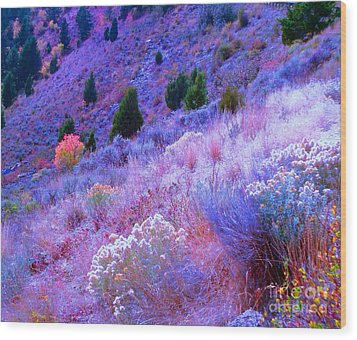 Yellowstone Summer Wood Print by Ann Johndro-Collins
