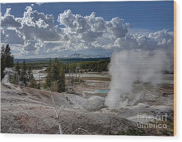 Wood Print featuring the photograph Yellowstone's Norris Geyser Basin by Bill Gabbert