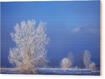 Yesterday's Blues Wood Print by Darren  White