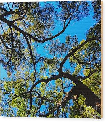 Yin Yang Midpoints Wood Print by Gem S Visionary