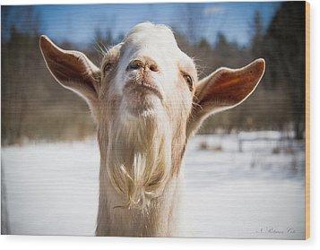 'yoda' Goat Wood Print