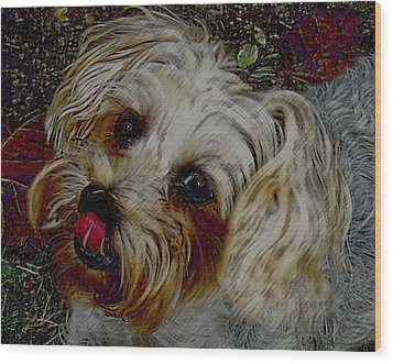 Yorkshire Terrier Artwork Wood Print by Lesa Fine